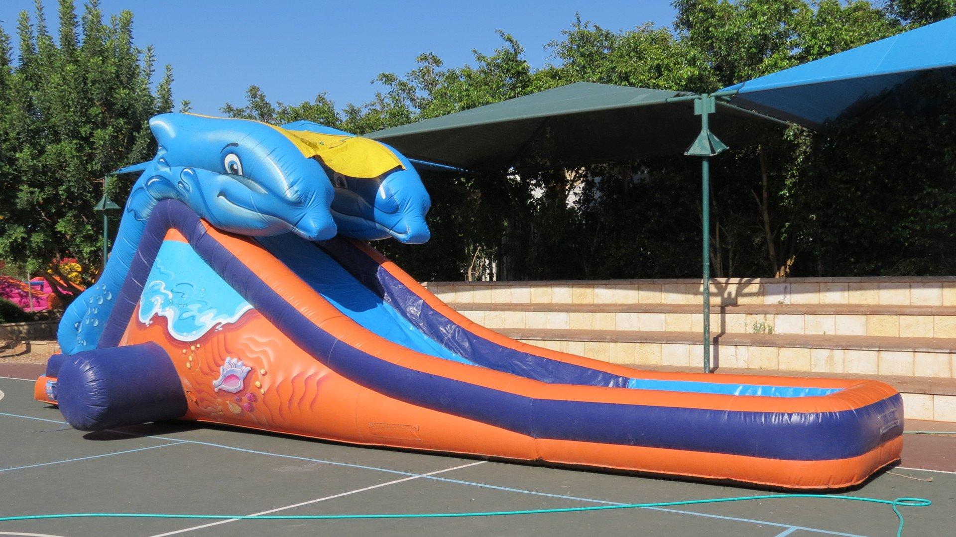 דולפין ענק